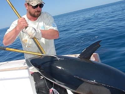 The best tips for gaffing a big fish for Fishing without a license california