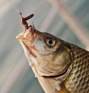 hooked-fish-todayifoundout